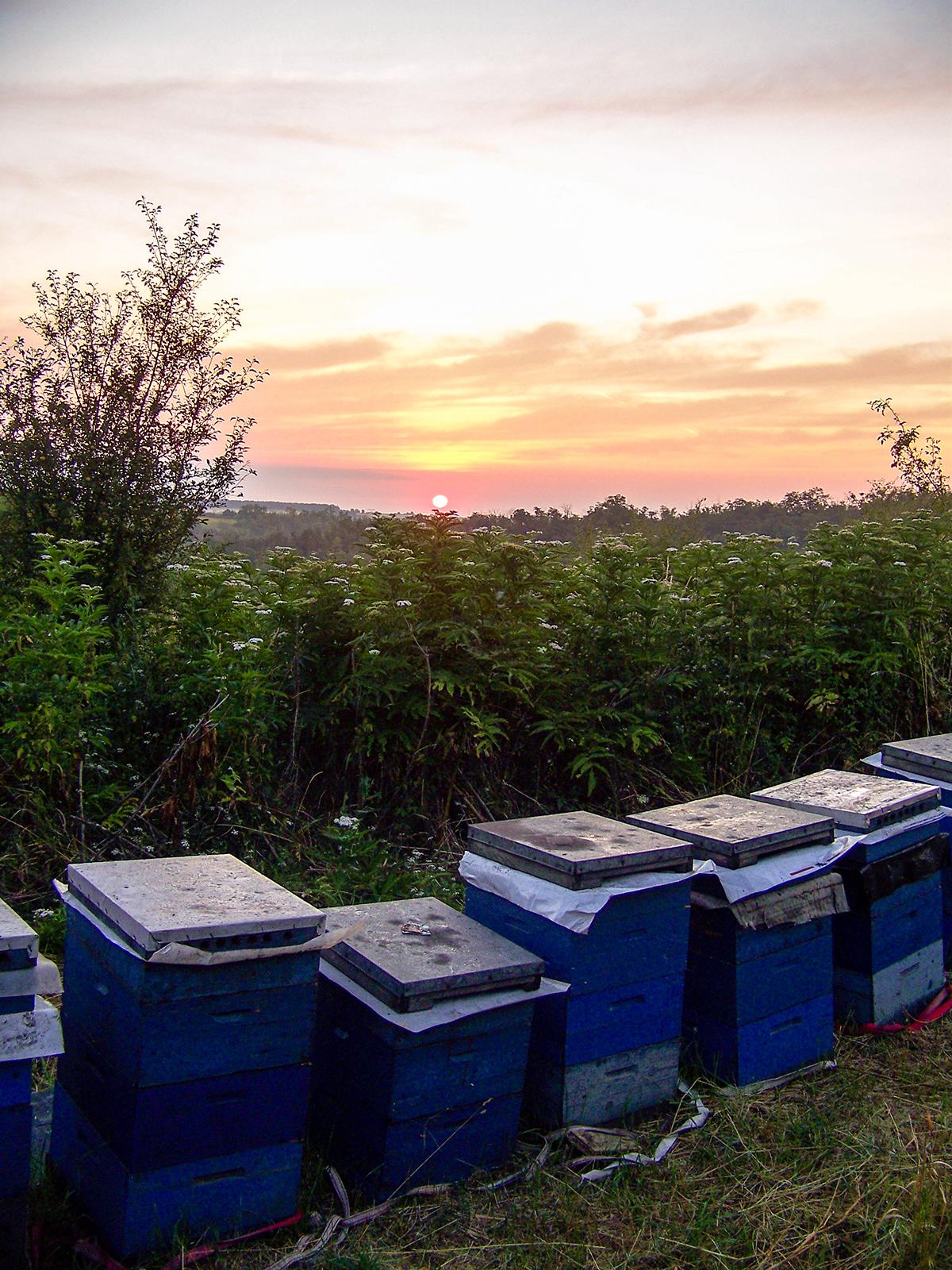 16. Kerület méhész