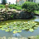 Kis kerti tó Fischer kertészet jóvoltából